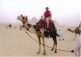 Dawn on a camel