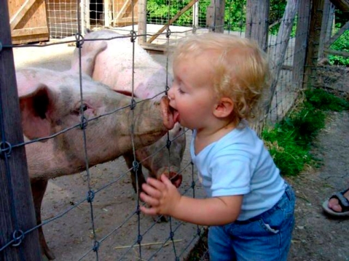 Kissing the pig