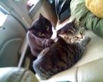 cats_car