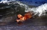 g-surfing