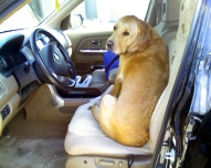 Grendel driving