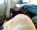 the_car_huddle