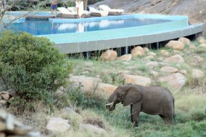 The elephants were very close to the pool and right outside our rooms.