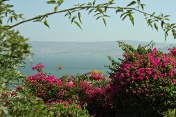 A view of the Sea of Galilee from the Mount of Beatitudes.